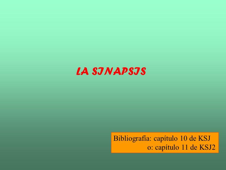 LA SINAPSIS Bibliografía: capítulo 10 de KSJ o: capítulo 11 de KSJ2
