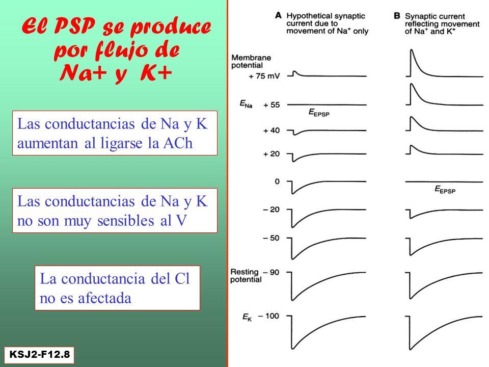El PSP se produce por flujo de Na+ y K+
