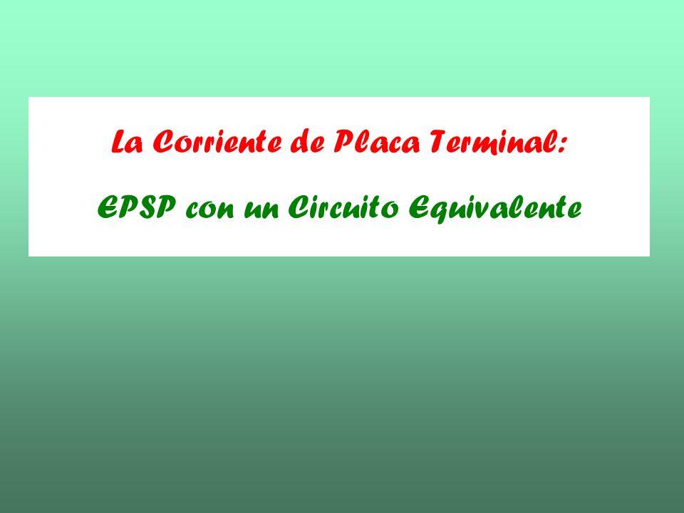 La Corriente de Placa Terminal: EPSP con un Circuito Equivalente