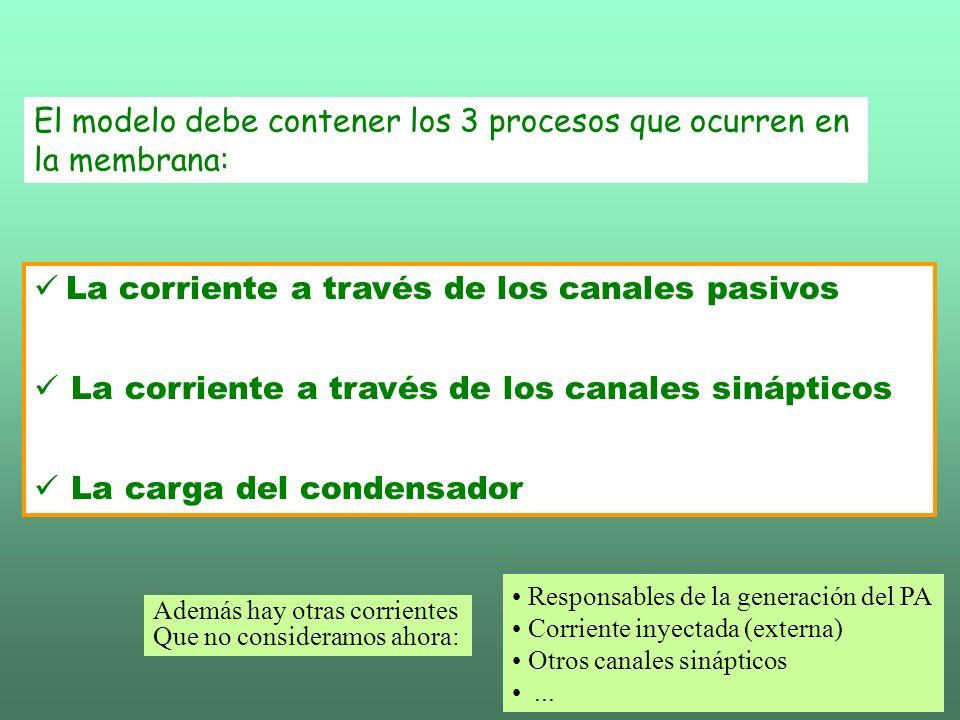 El modelo debe contener los 3 procesos que ocurren en la membrana: