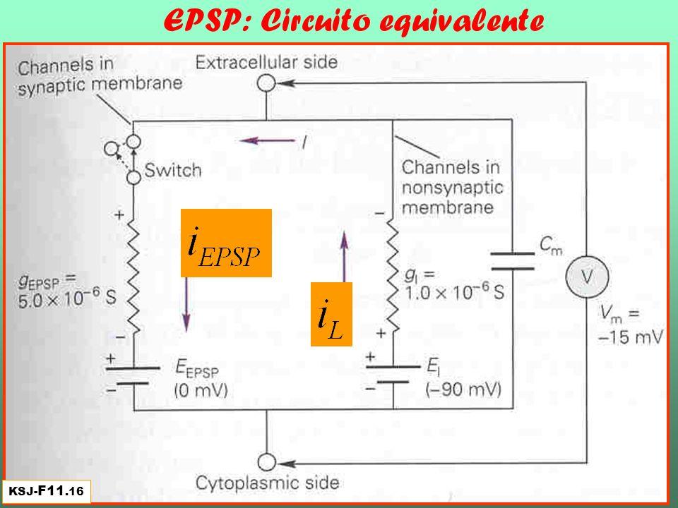 EPSP: Circuito equivalente