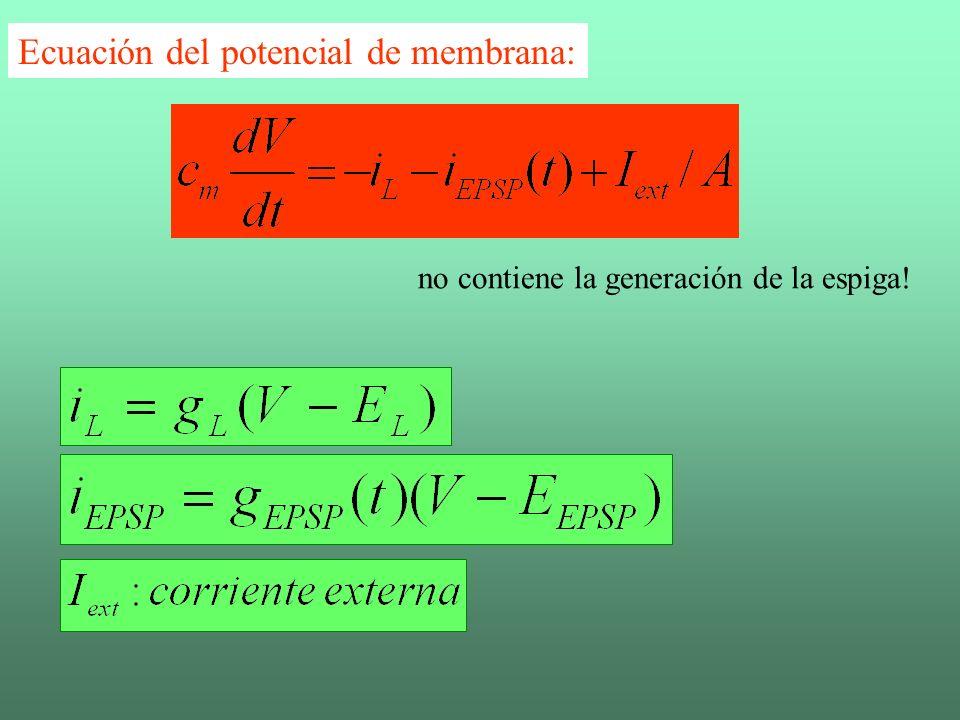 La evolución para V Ecuación del potencial de membrana: