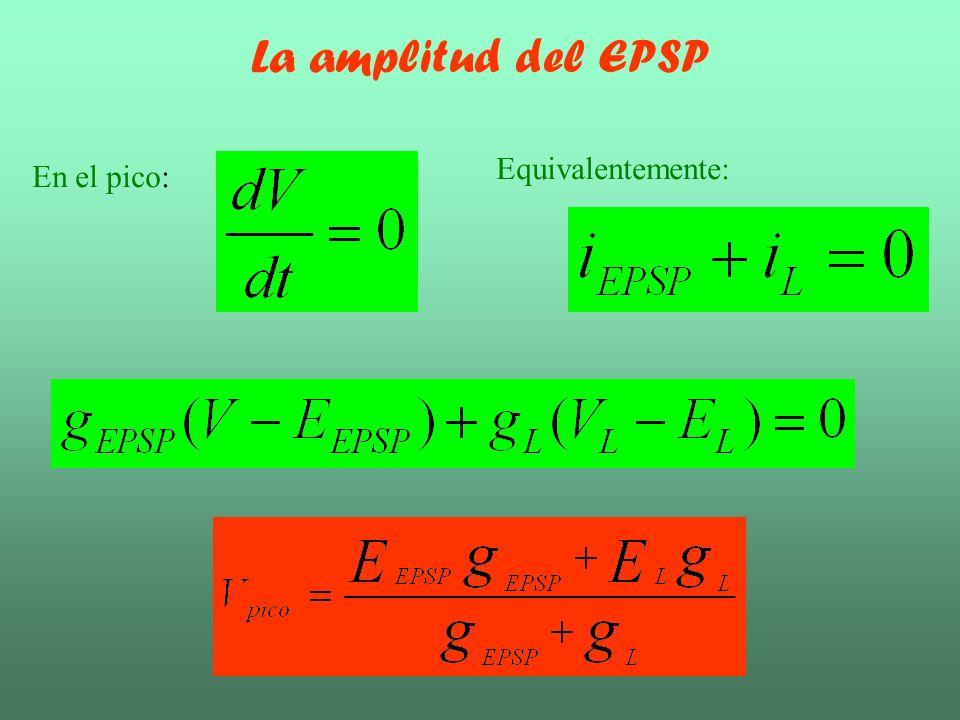 La amplitud del EPSP En el pico: Equivalentemente: