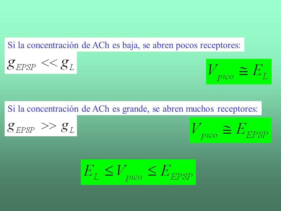 Si la concentración de ACh es baja, se abren pocos receptores: