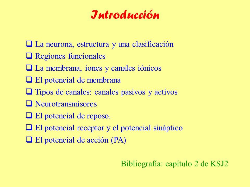 Introducción La neurona, estructura y una clasificación