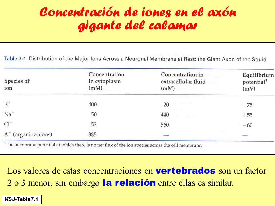 Concentración de iones en el axón gigante del calamar