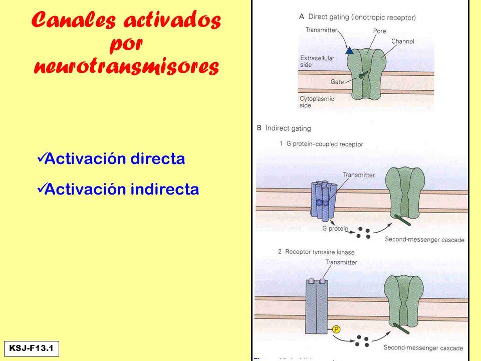 Canales activados por neurotransmisores