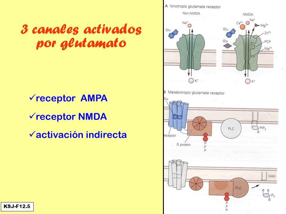 3 canales activados por glutamato