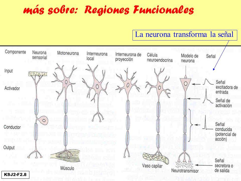 más sobre: Regiones Funcionales