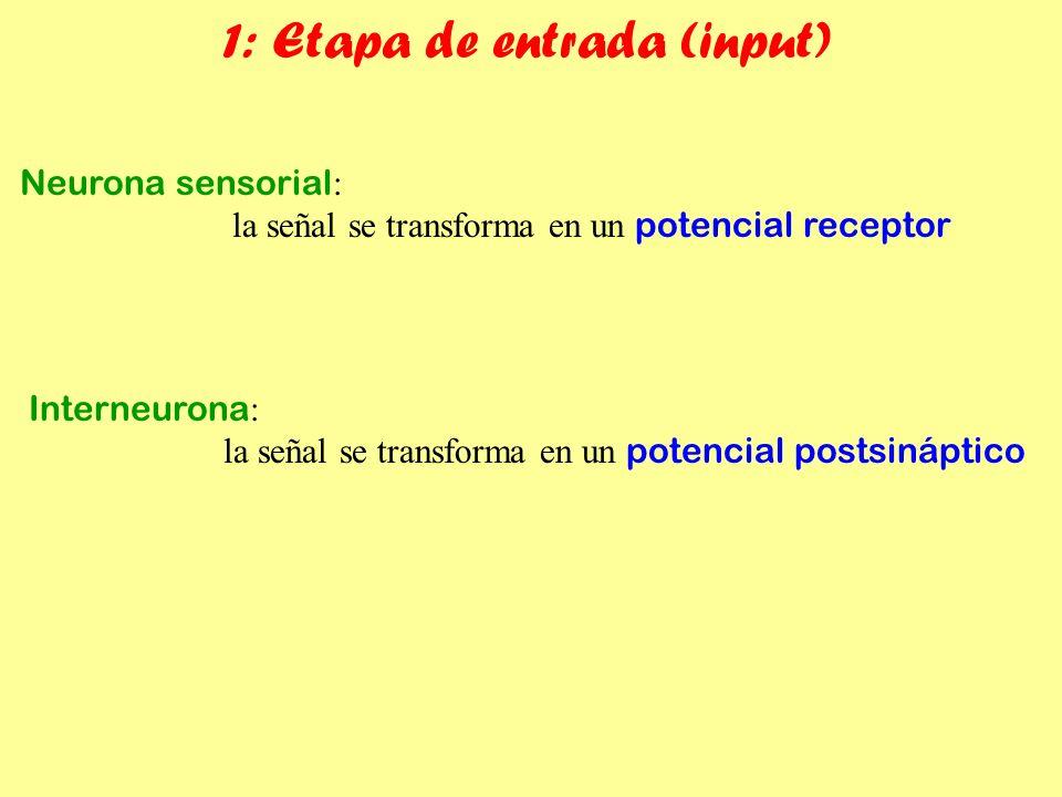 1: Etapa de entrada (input)