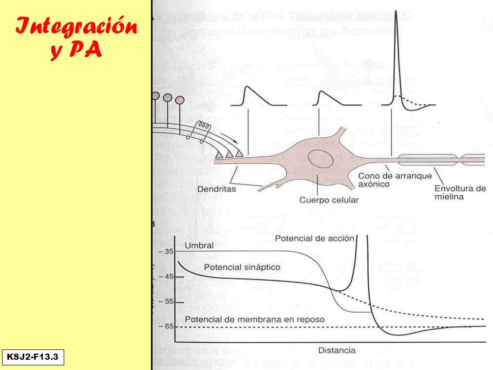 Integración y PA KSJ2-F13.3