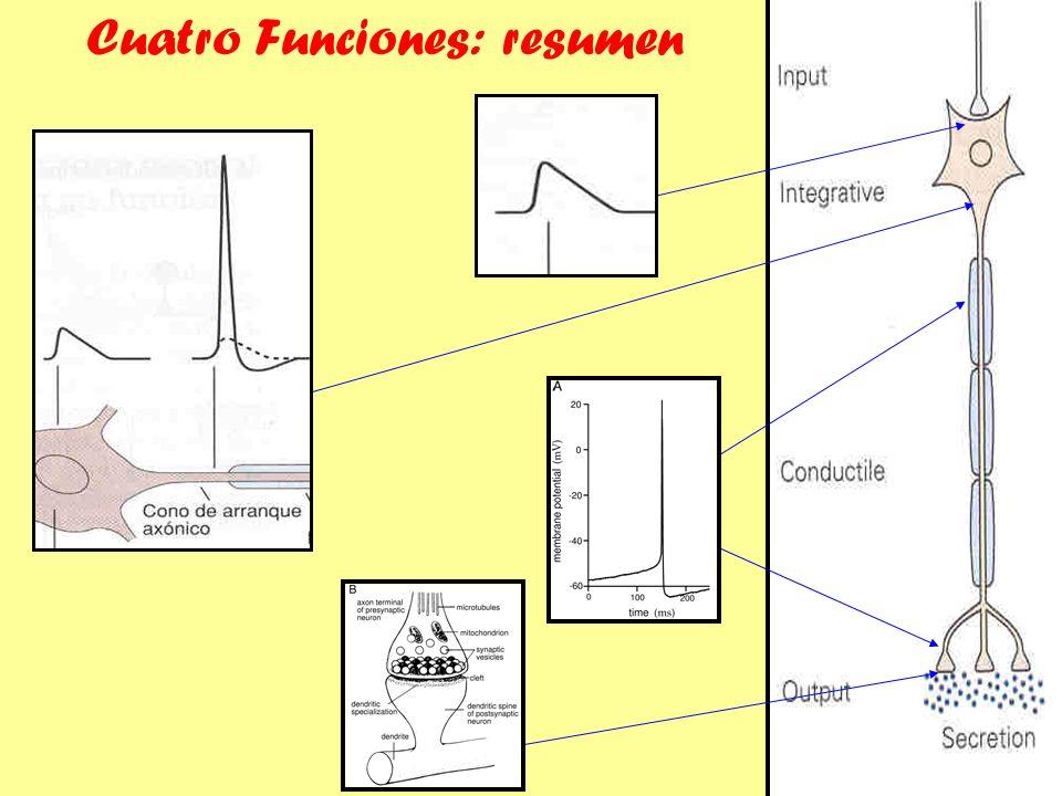 Cuatro Funciones: resumen