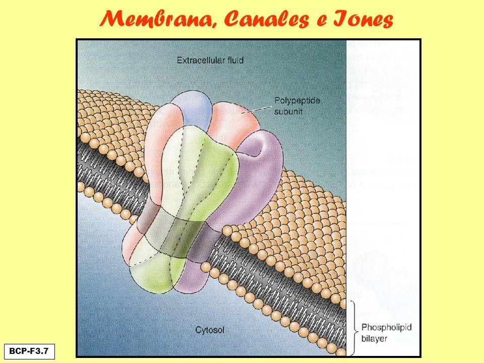 Membrana, Canales e Iones