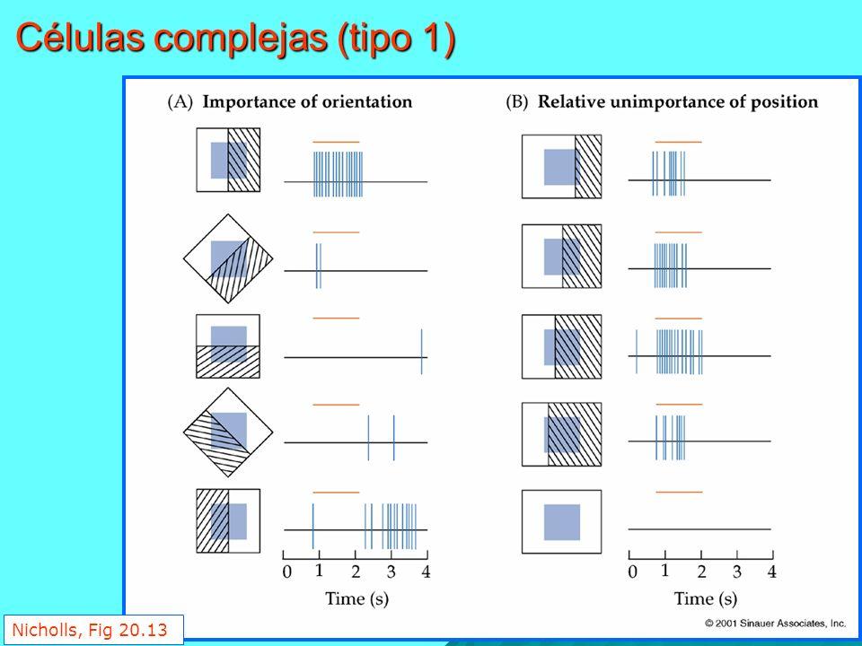 Células complejas (tipo 1)