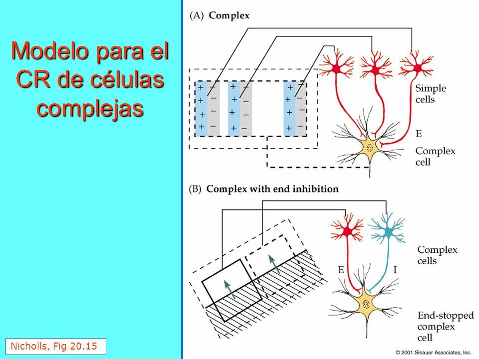 Modelo para el CR de células complejas