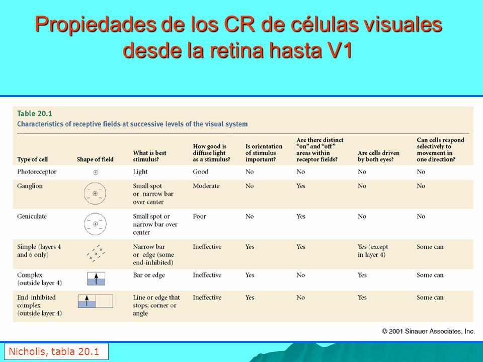 Propiedades de los CR de células visuales desde la retina hasta V1