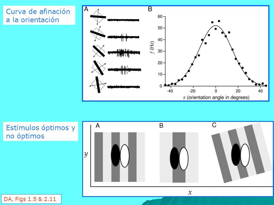 Curva de afinación a la orientación Estímulos óptimos y no óptimos