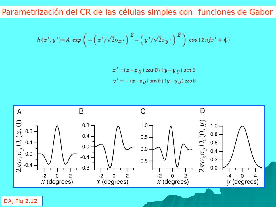 Parametrización del CR de las células simples con funciones de Gabor
