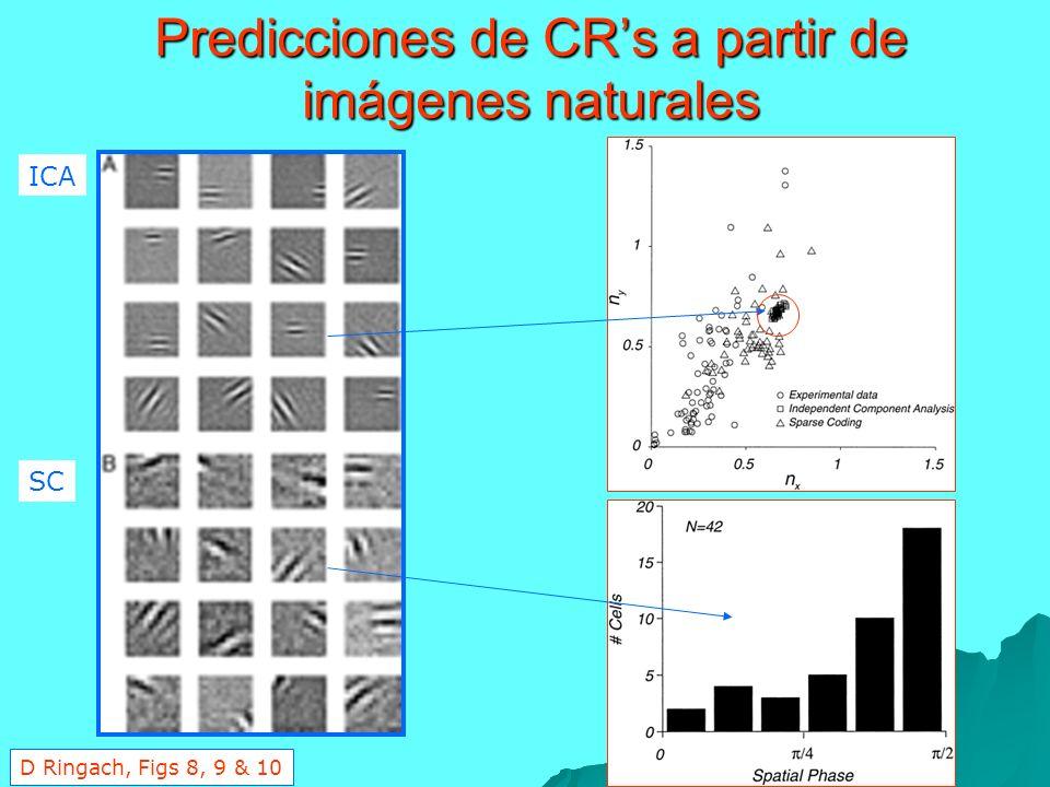 Predicciones de CR's a partir de imágenes naturales