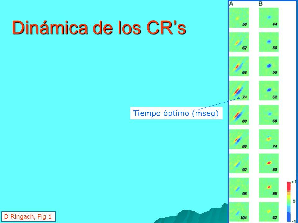 Dinámica de los CR's Tiempo óptimo (mseg) D Ringach, Fig 1
