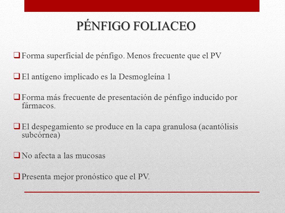 PÉNFIGO FOLIACEO Forma superficial de pénfigo. Menos frecuente que el PV. El antígeno implicado es la Desmogleína 1.