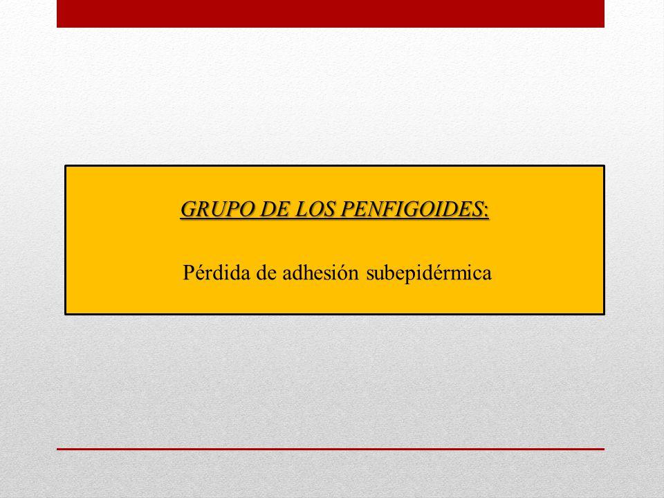 GRUPO DE LOS PENFIGOIDES: Pérdida de adhesión subepidérmica