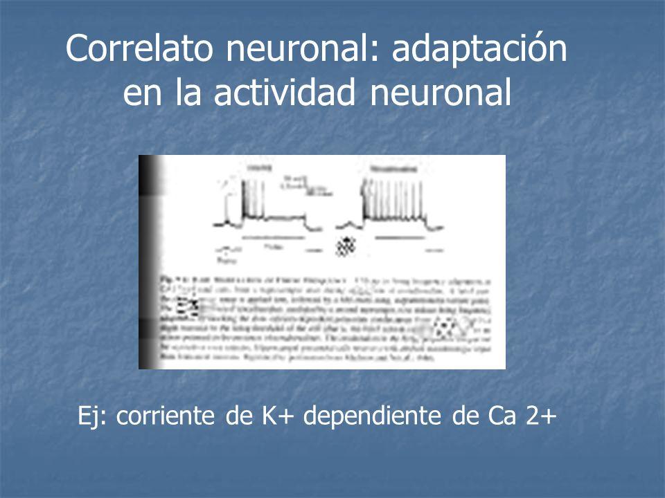 Correlato neuronal: adaptación en la actividad neuronal