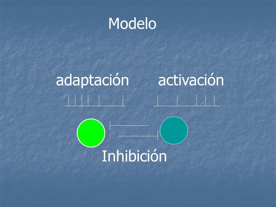 Modelo adaptación activación Inhibición