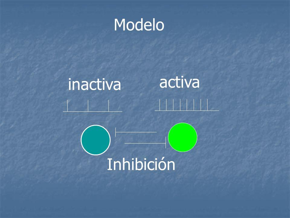 Modelo activa inactiva Inhibición