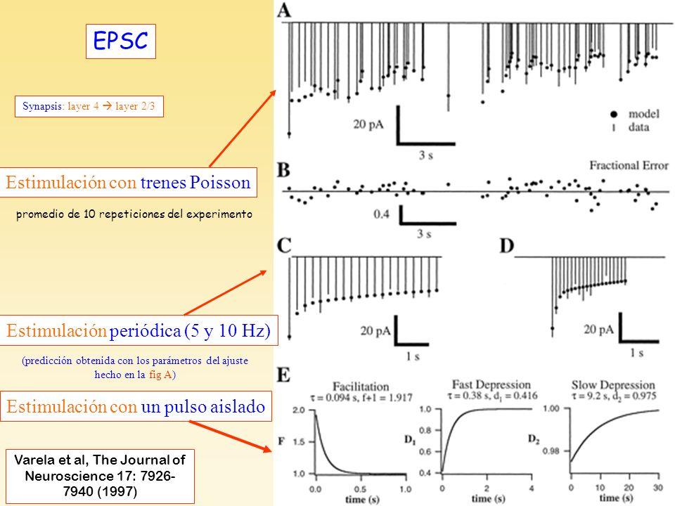 Varela et al, F3-EPSC EPSC Estimulación con trenes Poisson