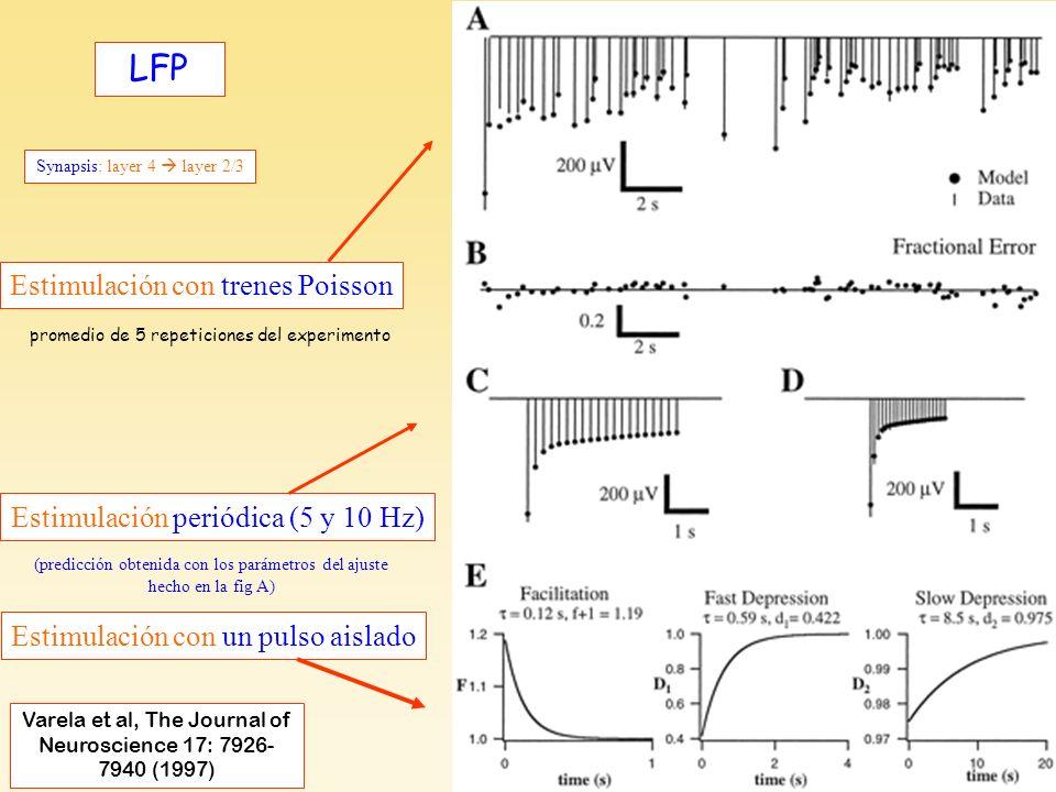 Varela et al, F4 Field Potentials