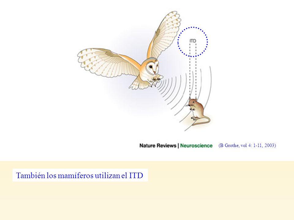 También los mamíferos utilizan el ITD