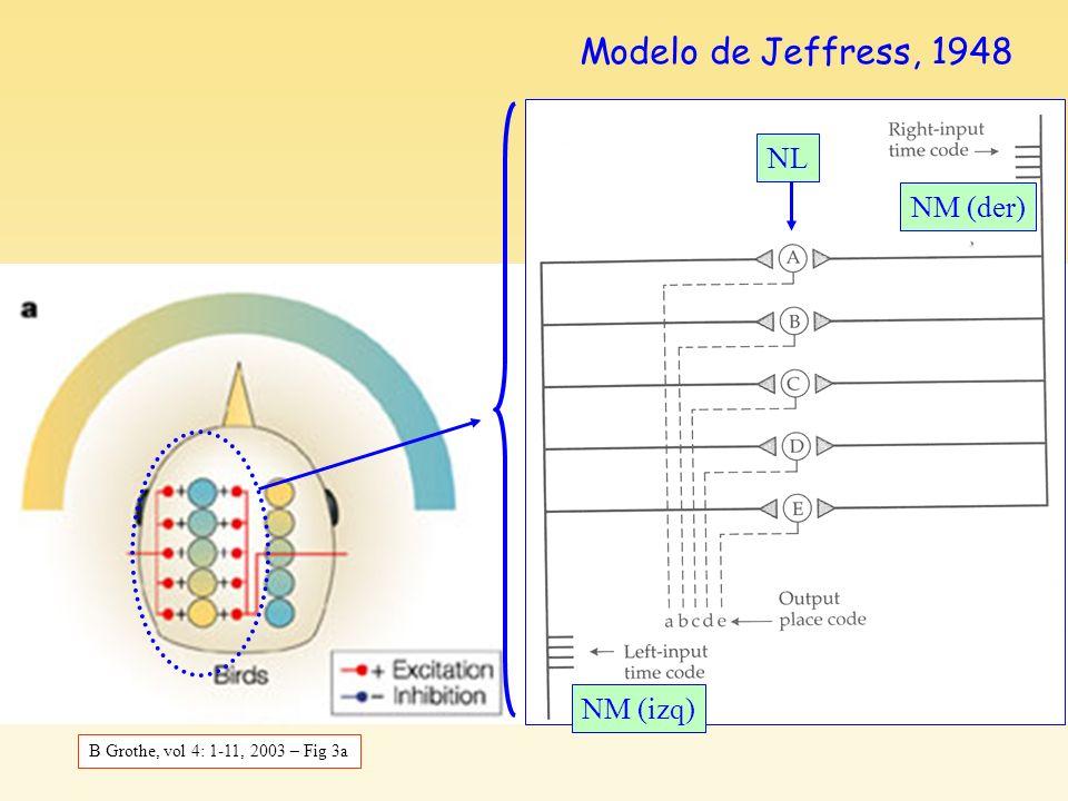 Texto Stevens (2) Modelo de Jeffress, 1948 NL NM (der) NM (izq)