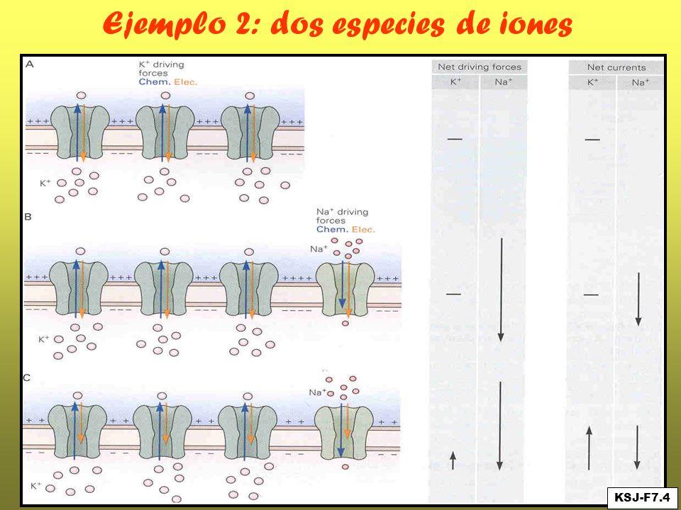 Ejemplo 2: dos especies de iones