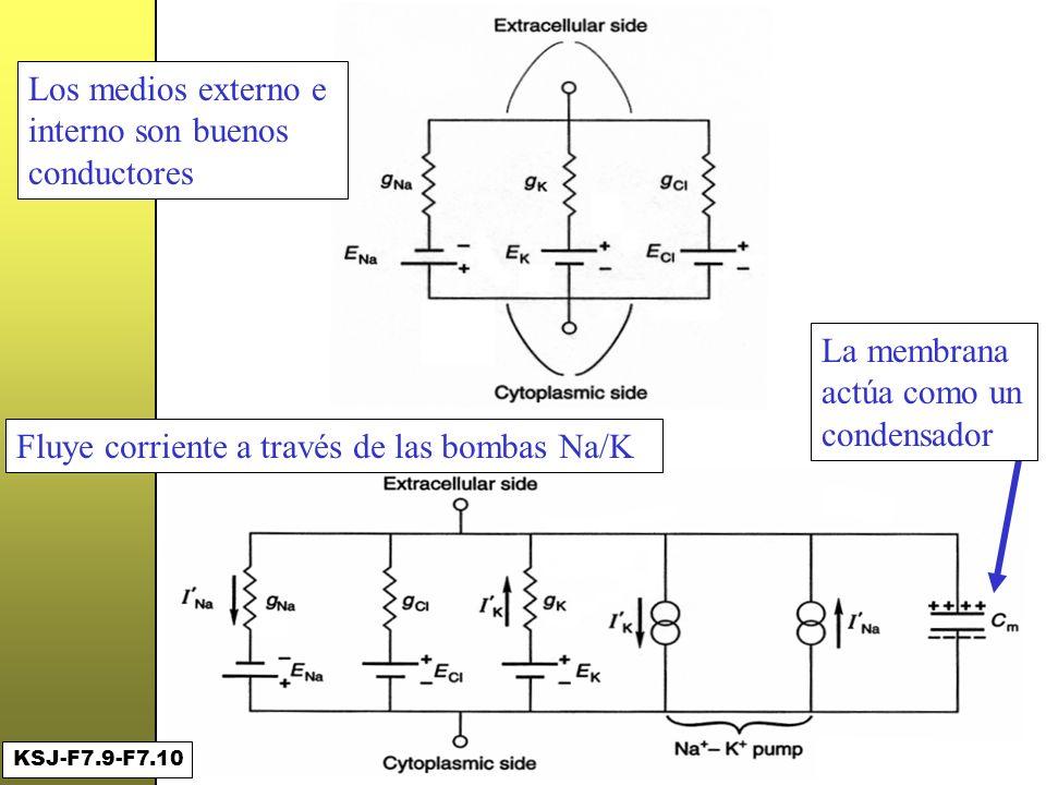Un primer circuito ... Los medios externo e interno son buenos