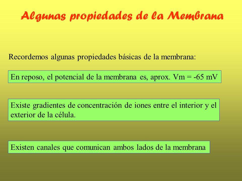 Algunas propiedades de la Membrana