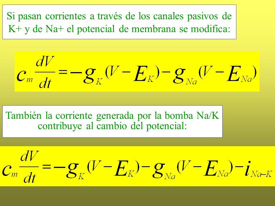 Si pasan corrientes a través de los canales pasivos de K+ y de Na+ el potencial de membrana se modifica: