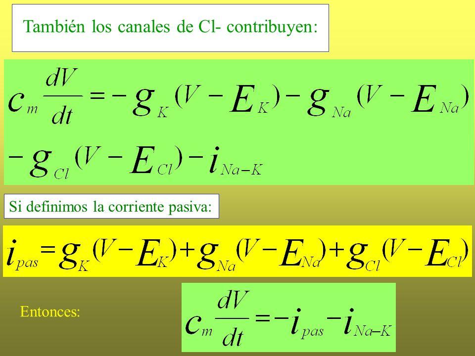 También los canales de Cl- contribuyen: