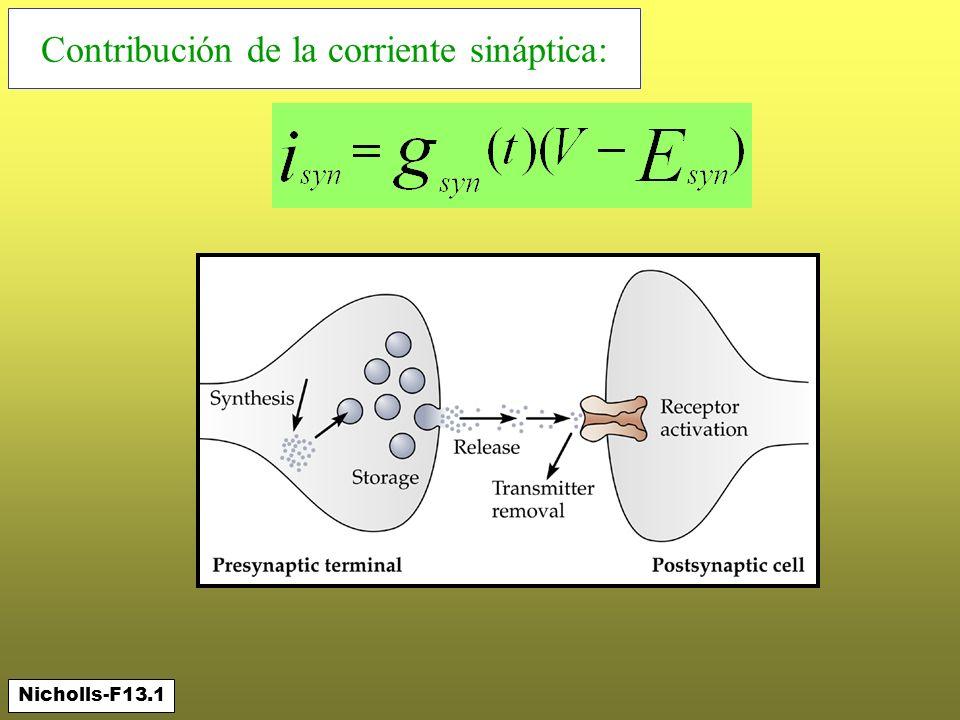 Contribución de la corriente sináptica:
