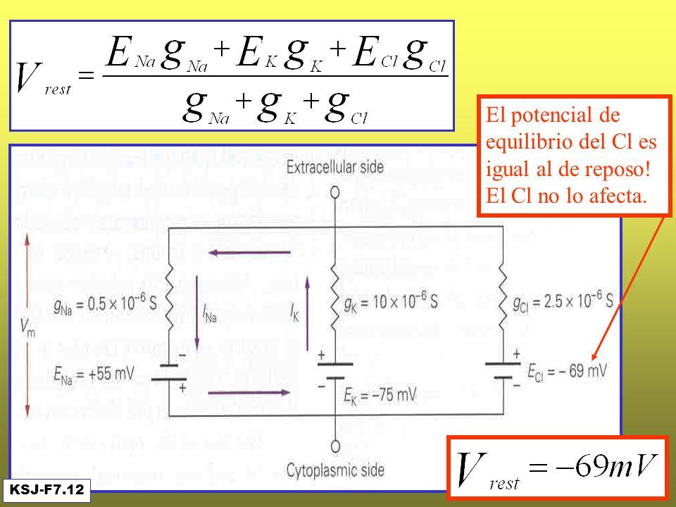 El potencial de equilibrio del Cl es igual al de reposo