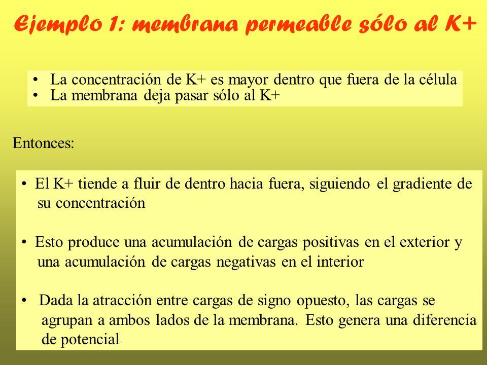 Ejemplo 1: membrana permeable sólo al K+