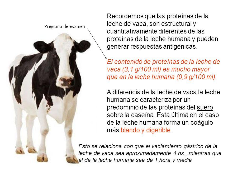 Recordemos que las proteínas de la leche de vaca, son estructural y cuantitativamente diferentes de las proteínas de la leche humana y pueden generar respuestas antigénicas.