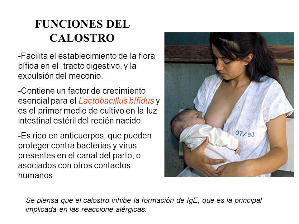 FUNCIONES DEL CALOSTRO