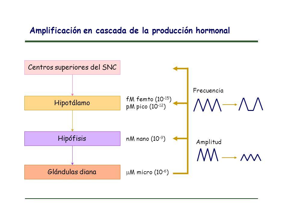 Amplificación en cascada de la producción hormonal