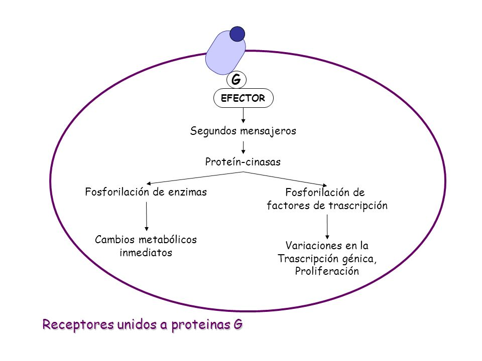 Receptores unidos a proteinas G
