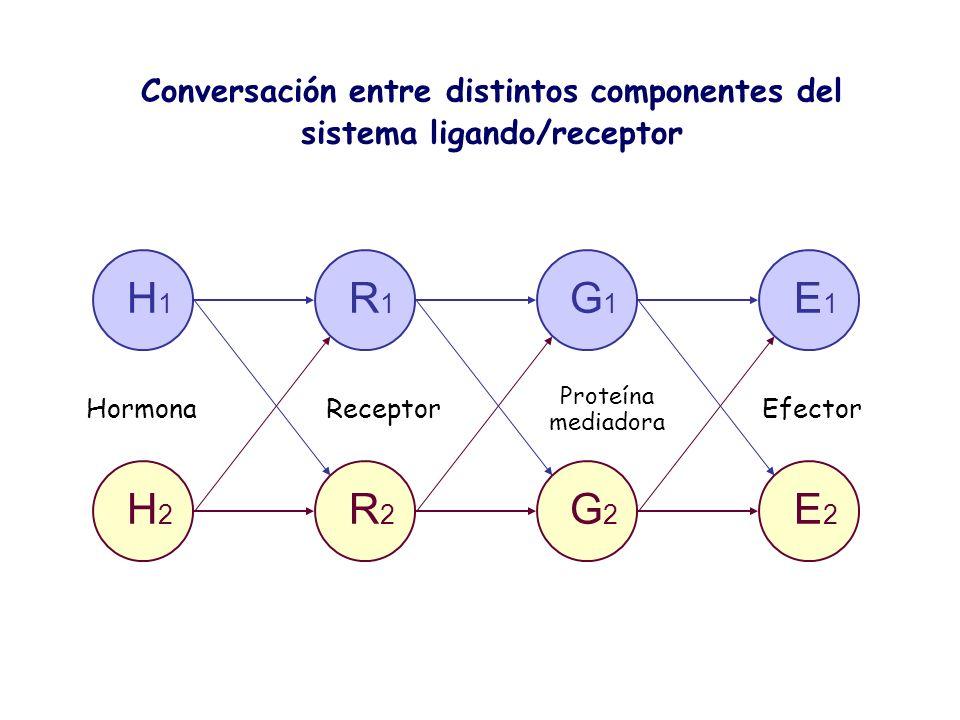 Conversación entre distintos componentes del sistema ligando/receptor