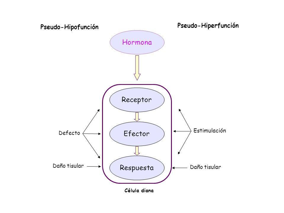 Hormona Receptor Efector Respuesta Pseudo-Hiperfunción