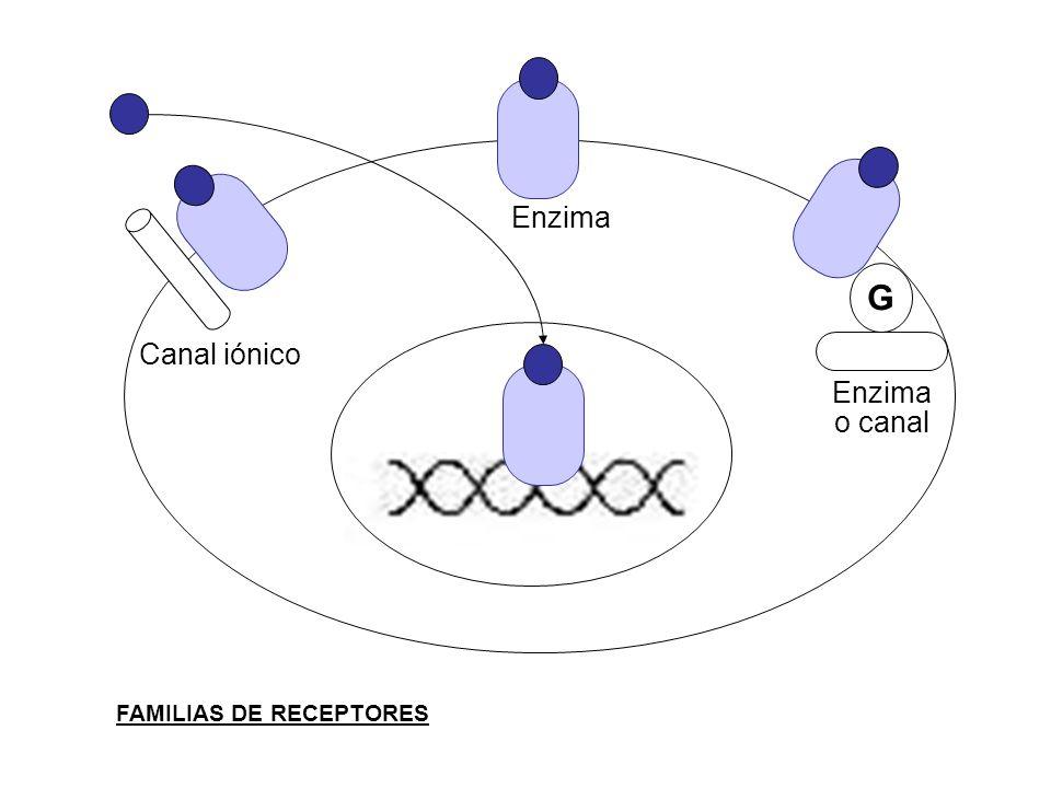 G Enzima Canal iónico Enzima o canal FAMILIAS DE RECEPTORES