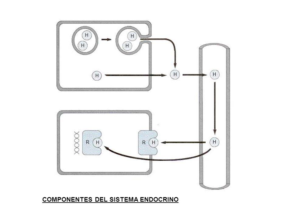 COMPONENTES DEL SISTEMA ENDOCRINO