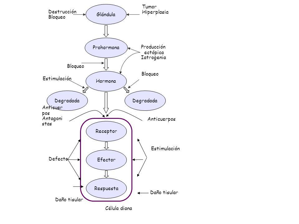 Hipofunción Hiperfunción Tumor Hiperplasia Destrucción Glándula